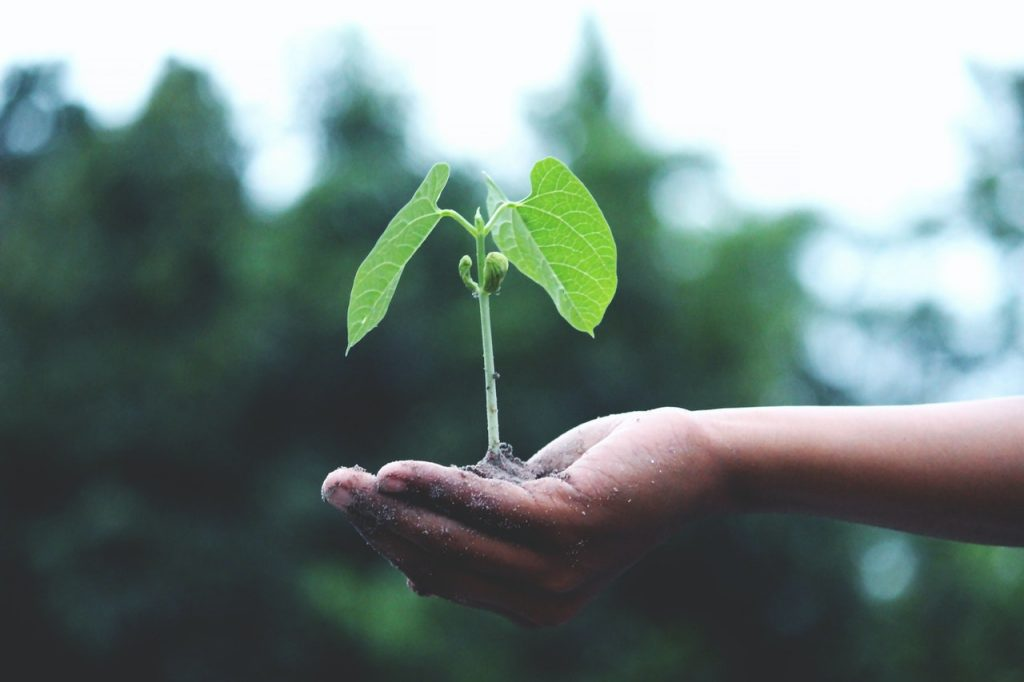 person-holding-a-green-plant-1072824(1)
